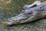 Yangon Crocodile Farm
